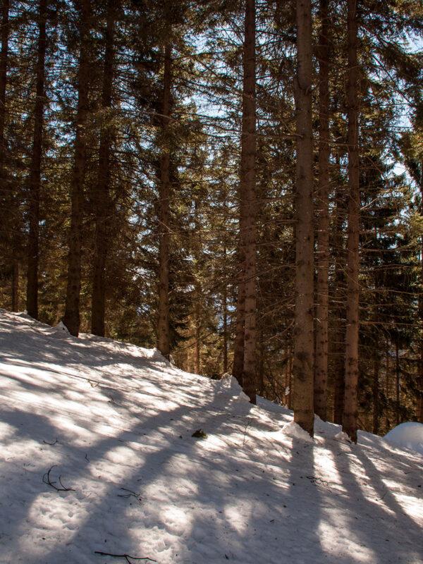 Bosco piemontese che fornisce il legno di castagno alla filiera forestale locale